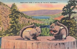 GREETINGS from  NATIVES OF PACIFIC NORTHWEST Chipmunks 1930/40s