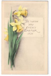 Easter Daffodils Narcissus Gibson Art Company Postcard