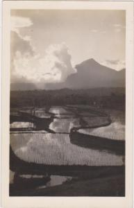 RP: Rice Paddys , Indonesia, 20-40s
