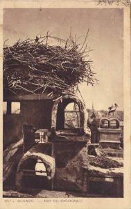 Nid De Cigognes, Alsace, France, 1900-1910s