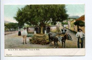 424423 PORTUGAL MADEIRA Corca de Bois Bullock cart Vintage postcard