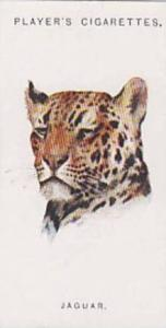 Player & Sons Vintage Cigarette Wild Animal Head Series No. 31 Jaguar 1931