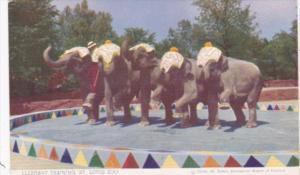 Elephant Training At St Louis Zoo Missouri