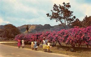 Panama Old Vintage Antique Post Card El Valle de Anton Tape on back