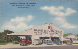 Orange Blossom Groves Citrus Stand Largo FLorida Curteich