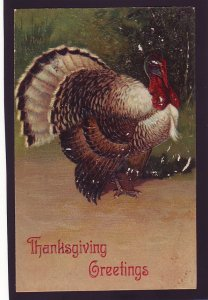 P1613 1907 thanksgiving turkey postcard with old stamp