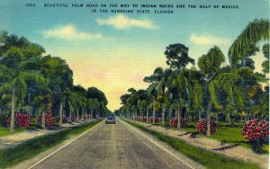 [ Linen ] US Florida - Beautful Palm Road Gulf Of Mexico