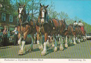 Virginia Williamsburg Merchants Square Budweiser Clydesdale 8 Horse Hitch Team
