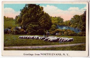 Greetings, North Evans NY