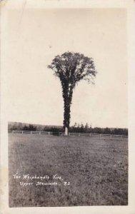 Canada Nova Scotia Upper Stewiacke The Whiphandle Tree Real Photo