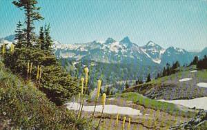 Washington Mt Rainier National Park Indian Basket Grass Tatoosh Range 1962