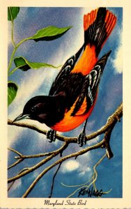 Maryland State Bird Baltimore Oriole