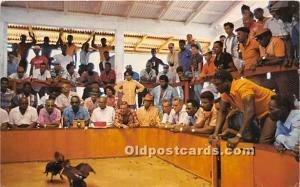 Cockfighting in one of St Maarten's 1985
