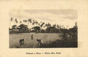 PC CPA MOZAMBIQUE, NATIVE RICE FIELDS, Vintage Postcard (b24875)
