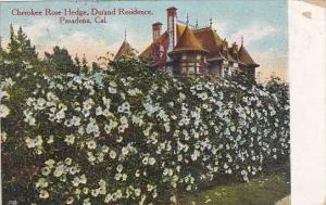 California Pasadena Cherokee Rose Hedge Durand Residence