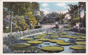 Minnesota Saint Paul Lilly Pond Como Park