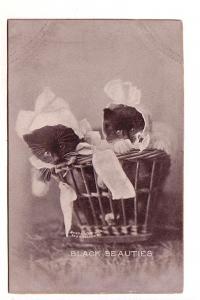 Two Kittens Wearing Bonnets, Black Beauties, 1902 Cedullar, Sheahan Cats