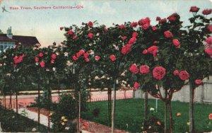 Postcard Rose Trees Southern California