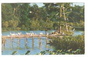 Scene in Bird City, in Jungle Gardens at Avery Island,  Louisiana, 40-60s