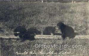 Houghton Lake, MI, Michigan, USA Bear Postcard, Bear Post Card Old Vintage An...