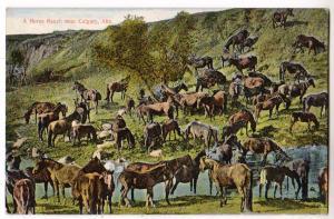Horse Ranch, Calgary Alta