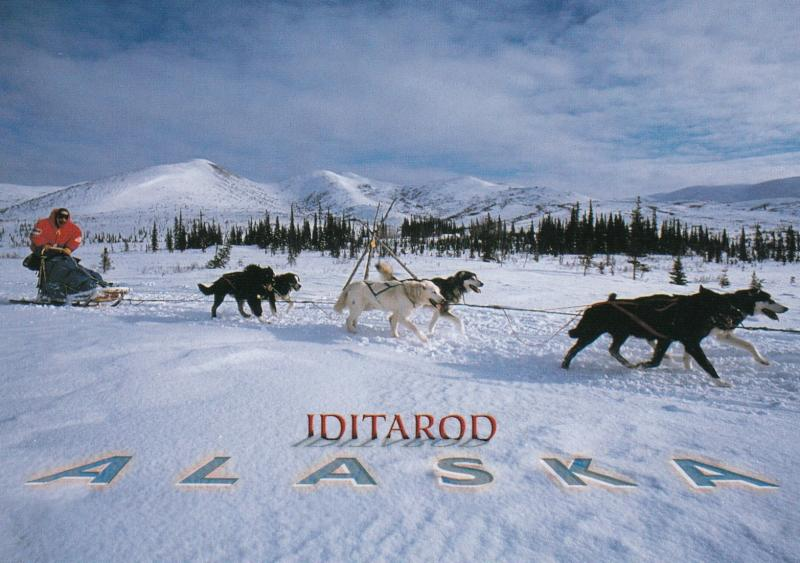 IDITAROD Sled Dog Race , Alaska , 1980s