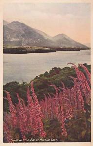 Foxglove Time. Bassenthwaite Lake , 30-40s