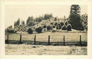 United States real photo postcard Mintlewood trees Oregon Coast Highway