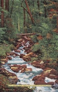 Porters Creek Great Smoky Mountain National Park Tennessee