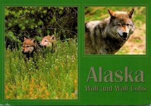 Wolf and Cubs Denali Park Alaska 2001
