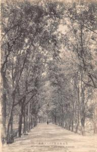 Dairen China West Park Acacia Avenue Antique Postcard J77623