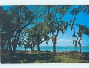 Pre-1980 NATURE SCENE Hilton Head Island South Carolina SC AD2659