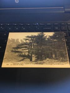 Vintage Postcard: France, Snow falling on the Cedars