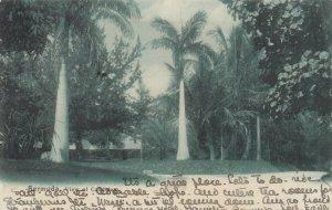 DEVONSHIRE, Bermuda, 1901-07; View of Camden House