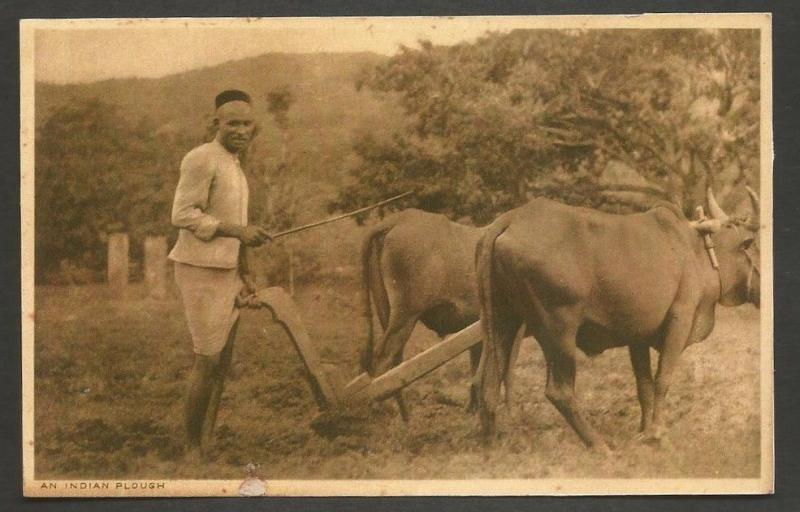 India vintage postcard AN INDIAN PLOUGH