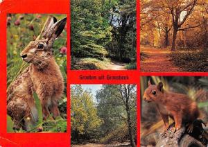 Netherlands Groeten uit Groesbeek, Forest Autumn Animals Rabbit Squirrel