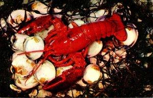 Massachusetts Cape Cod Lobster Ready For Eating
