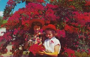 Texas Mcallen This Deep Magenta Bougainville Blooms Twelve Months In The Year...
