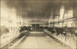 New Boston NH Cement Barn Cattle in Pens c1910 Real Photo Postcard
