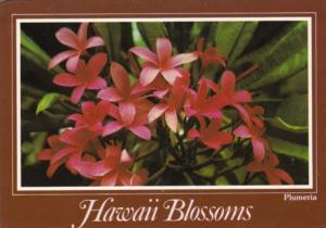 Hawaii Blossoms Plumeria Flowers