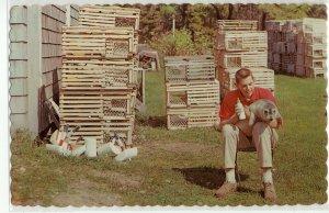 Maine Salt Water Pets Souvenir Postcard - Man Bottle Feeding a Seal - P13