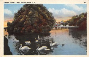 Swans, Sunset Lake Asbury Park, New Jersey, USA Unused