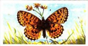 Brooke Bond Tea British Butterflies No 12 Small Pearl-Bordered Fritillary