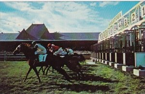Start Of A Race On The Turtf Course At Saratoga New York