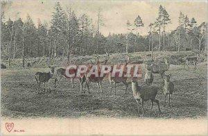 Old Postcard Biches