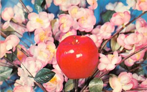 Fruit Assorted Apple Blossom Time Georgia, USA Unused