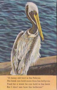 Florida Birds The Pelican