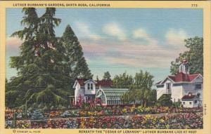 California Santa Rosa Luther Burbank's Gardens