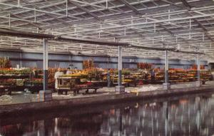 Postcard AALSMEER Flower Market Quay for Bedding Plants & Supply Canal HOLLAND