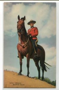 Royal Canadian Mounted Police Mountie Horse RMCP Canada postcard